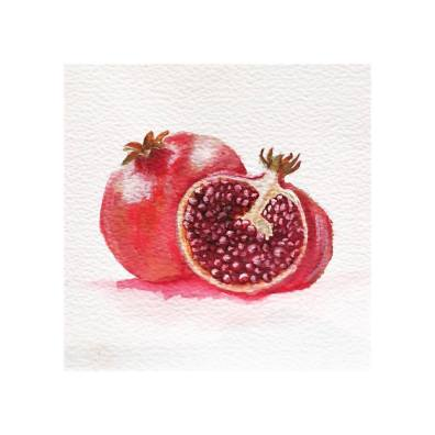 Pomegranate - watercolour and ink